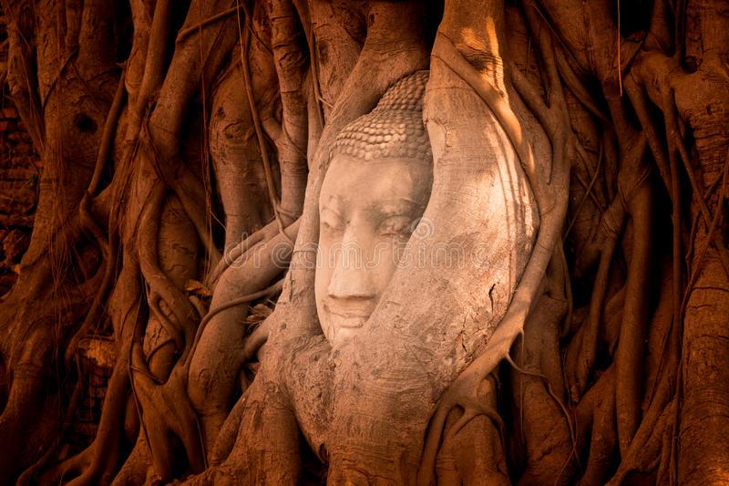 The head of a sandstone Buddha statue nestled in the tree roots beside the minor chapels of Wat Maha That, Phra Nakhon Si Ayutthay stock images