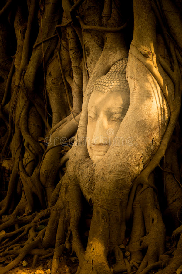 The head of a sandstone Buddha statue nestled in the tree roots beside the minor chapels of Wat Maha That, Phra Nakhon Si Ayutthay stock photography