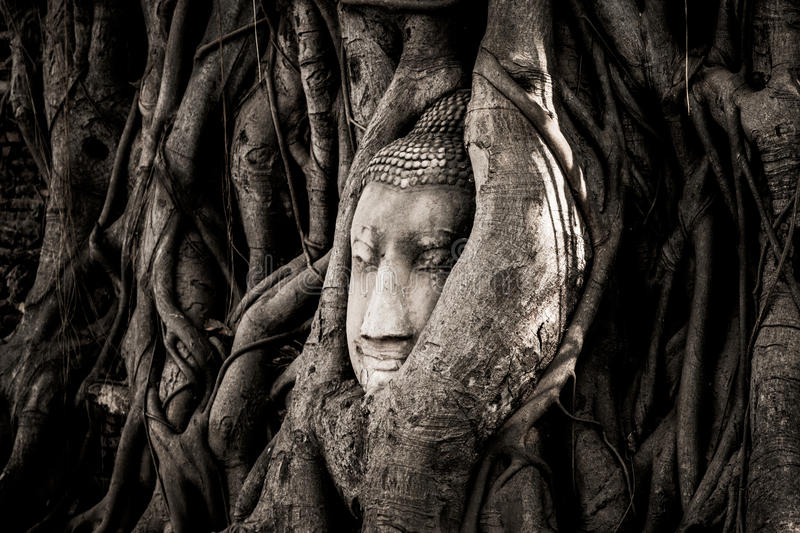The head of a sandstone Buddha statue nestled in the tree roots beside the minor chapels of Wat Maha That, Phra Nakhon Si Ayutthay royalty free stock photo