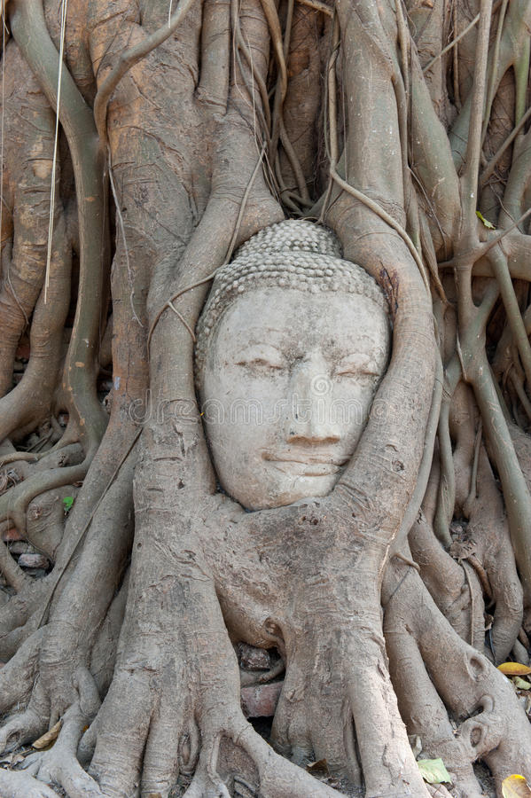 Head Of Sandstone Buddha In The Tree Roots Royalty Free Stock Images