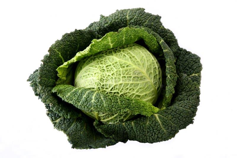 Head Savoy cabbage