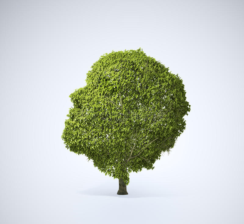 Download Head shaped tree stock illustration. Image of ecology - 24078717