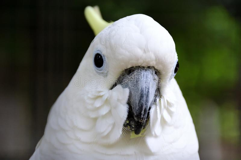 Head shoot of white bird with eye contact. White, bird, head, head shoot, eye, eye contact, animal, wild, wild animal, life, park, nature, fauna, natural stock photography
