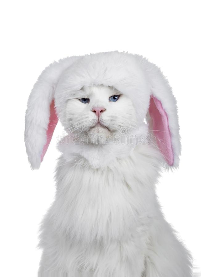 Head shot of cat wearing bunny hat royalty free stock image
