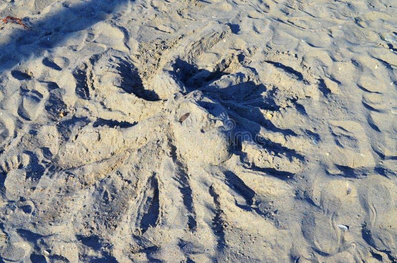 Head skulptur på stranden arkivfoto