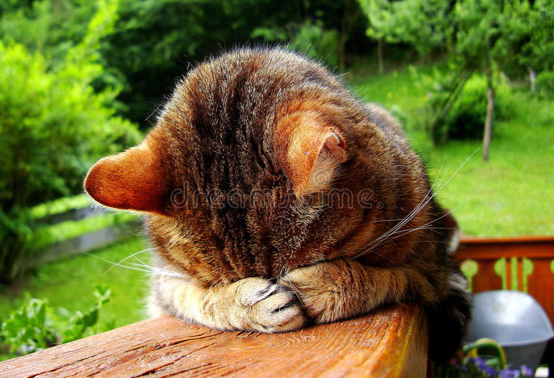 Sleeping funny cat royalty free stock image