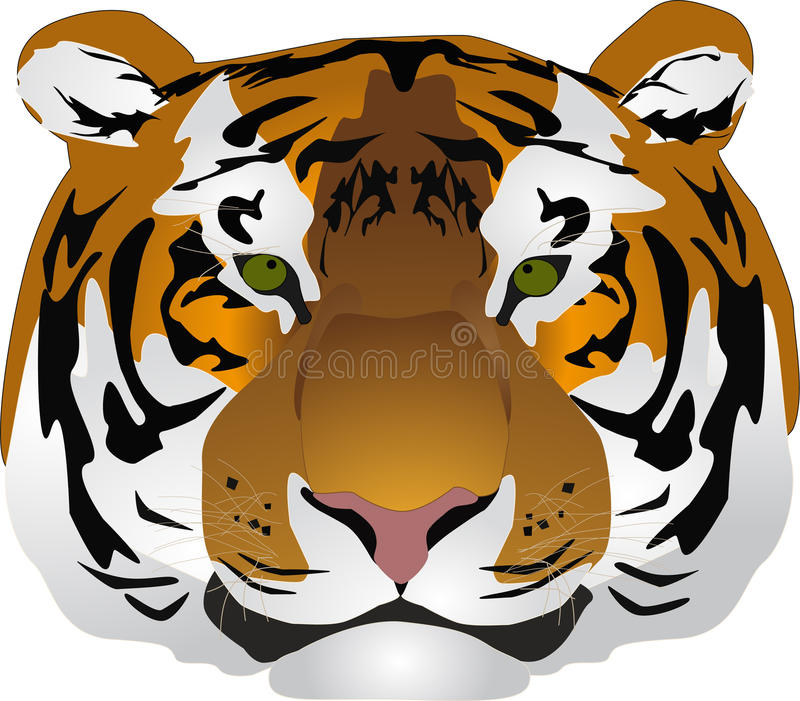 Head tiger stock images