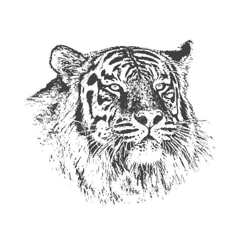 Head of tiger royalty free illustration