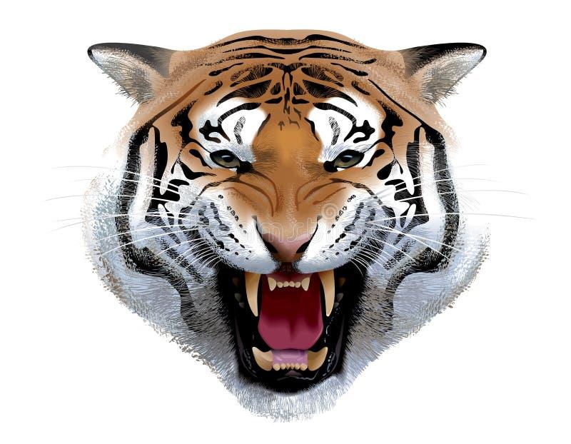 head tiger illustration stock illustrationer