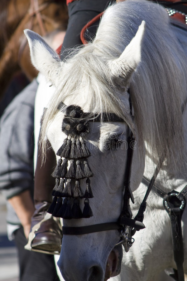 Head of a white horse 10 royalty free stock image