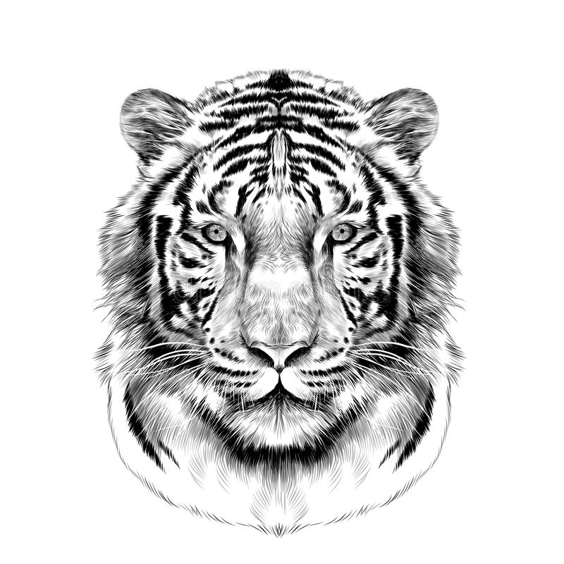 Tiger roaring side view sketch