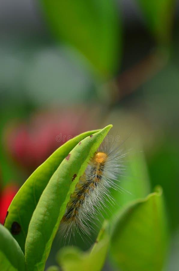 head yellow för caterpillar royaltyfri bild