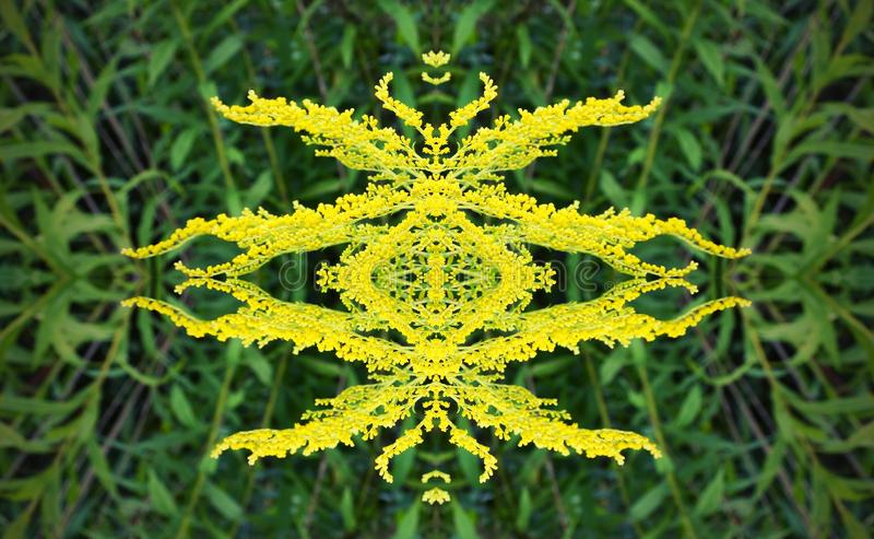 the head of the yellow Mimosa flower geometry is the correct symbol shape. royalty free stock photos