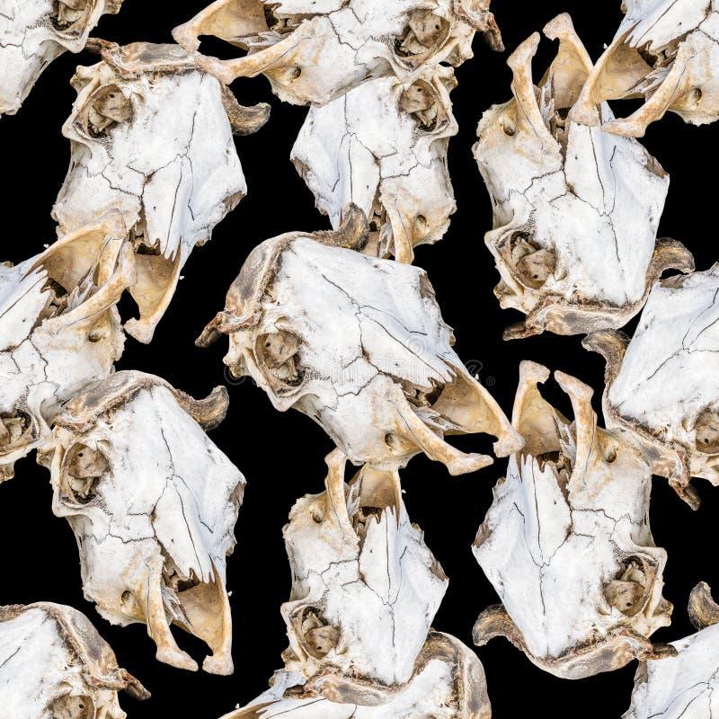 Headbones för kusligt däggdjur sömlös modell royaltyfri illustrationer