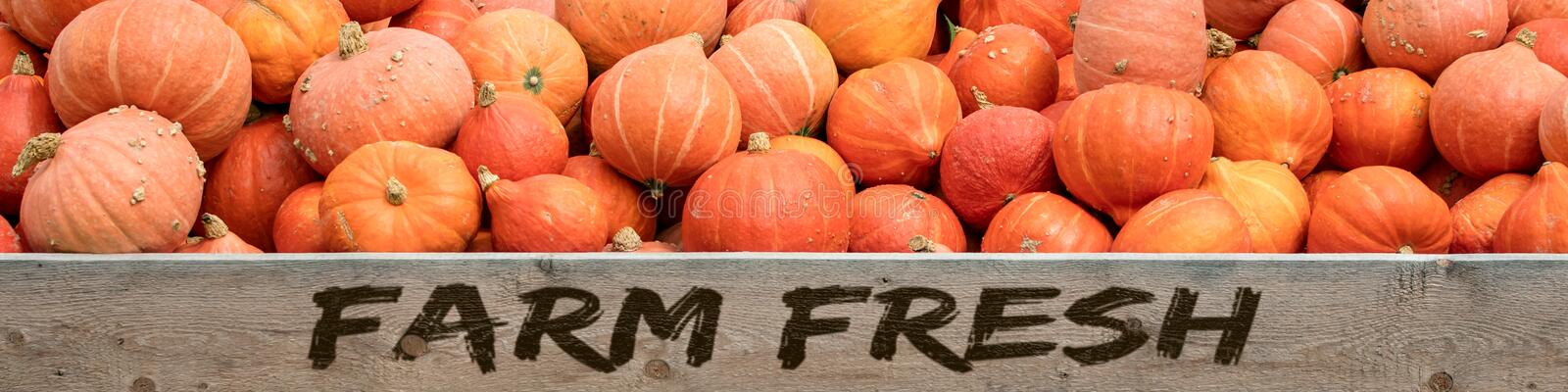 Header, red kuri squash with text Farm fresh stock photography
