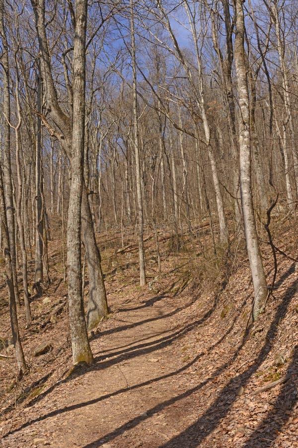 Heading upp en Forested bergslinga arkivfoto