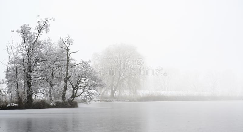Headland with bare trees covered by hoar frost on a frozen lake on a cold foggy winter day, gray landscape with copy space stock photography