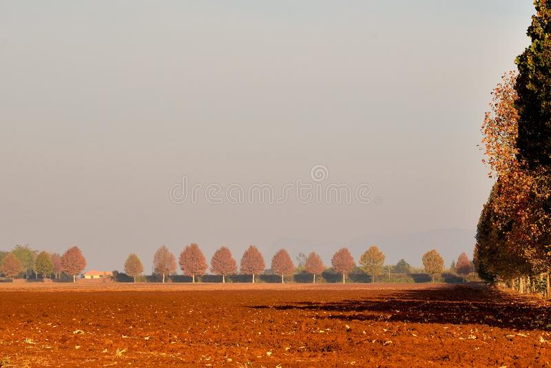 Headland. Copper coloured trees in Autumn surrounding ploughed land near Skeerpoort South Africa royalty free stock photo