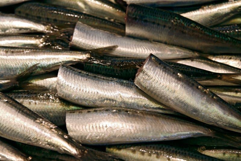 Headless mackerels stock images