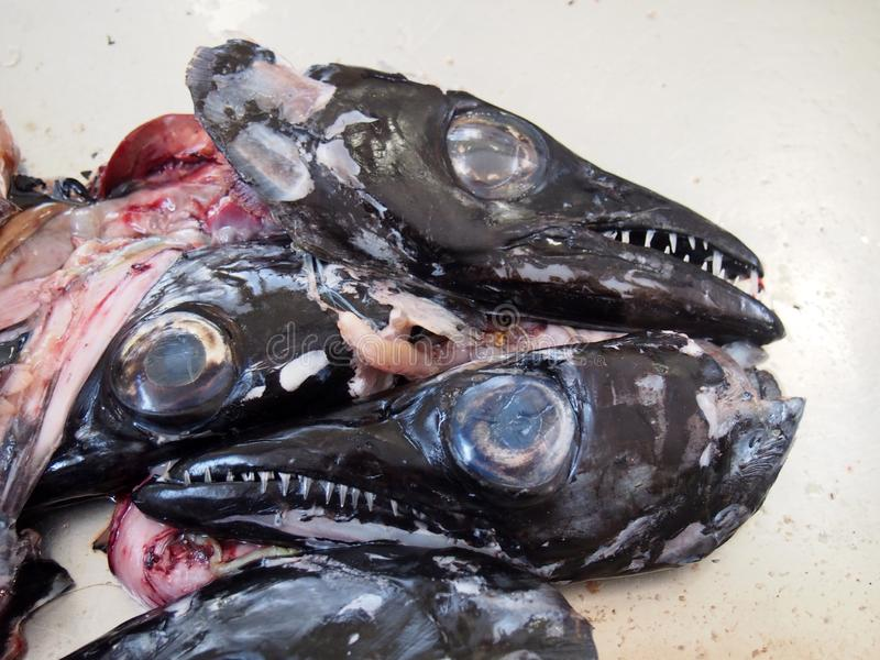 Heads of the black scabbard fish Aphanopus carbo left over from filleting on a market stall in funchal madeira. The heads of the black scabbard fish Aphanopus stock images