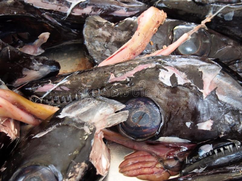 Heads of the black scabbard fish Aphanopus carbo left over from filleting on a market stall in funchal madeira. The heads of the black scabbard fish Aphanopus royalty free stock photos