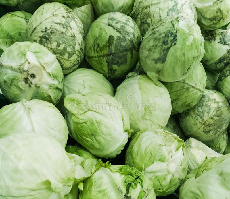 Cabbages. Heads of the cabbage, closeup stock photo