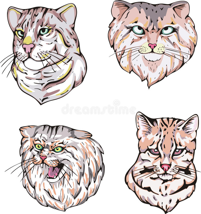 Download Heads of cats stock vector. Illustration of wild, mammal - 27117659