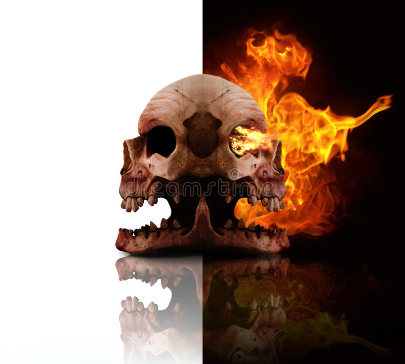 Download Heads Of Decay stock image. Image of decapitated, bones - 14760333