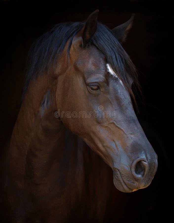 Headshot del caballo fotos de archivo