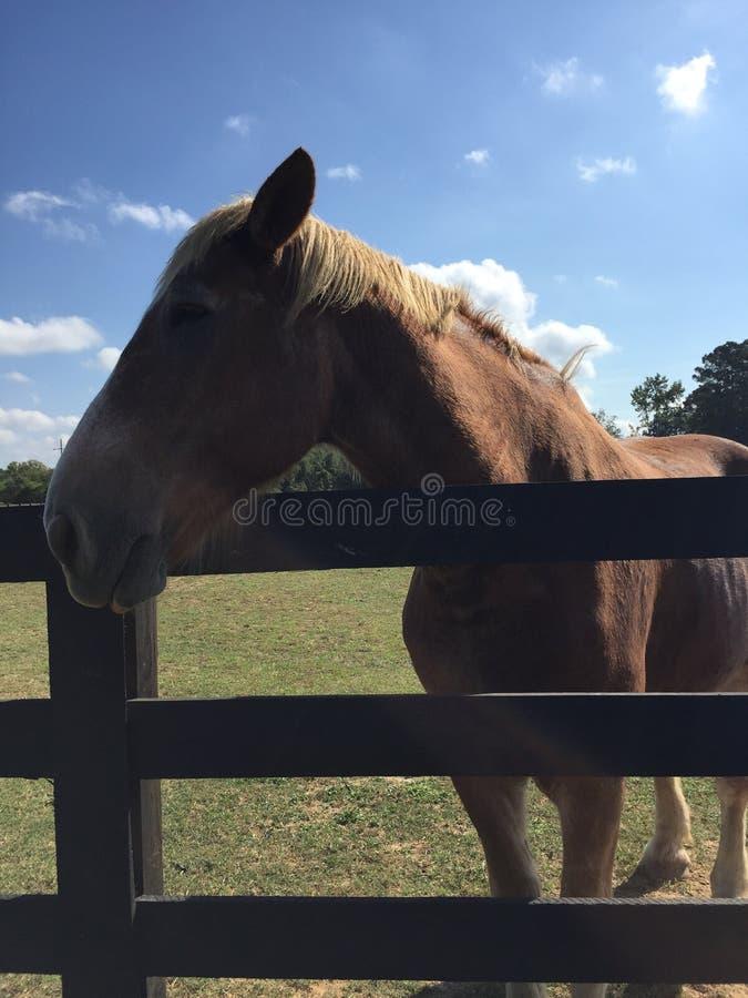 Headshot do cavalo imagens de stock