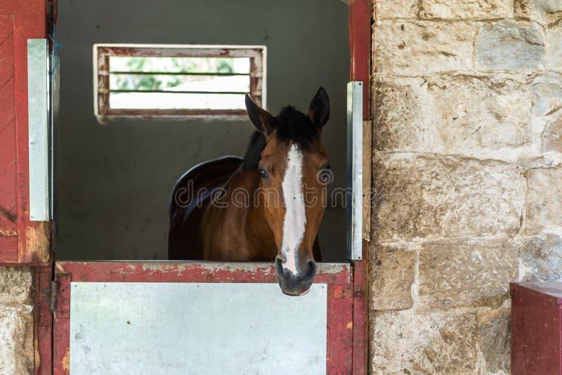 Headshot do cavalo no clube equestre, close up, luz do dia imagem de stock royalty free