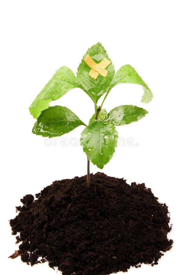 Download Heal the world stock image. Image of ground, care, ecology - 11943239