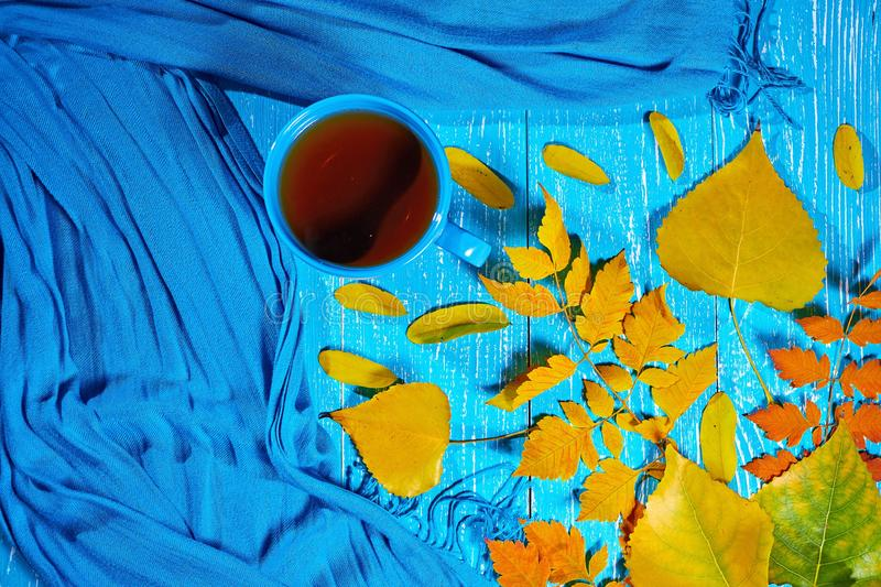 Healing cup of tea in a scarf on blue wooden background wiyh autumn leaf. Top view stock photography