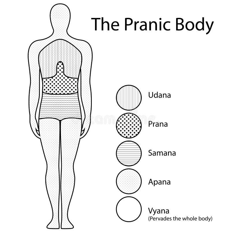 Healing energy. Line drawing of healing body energy stock illustration
