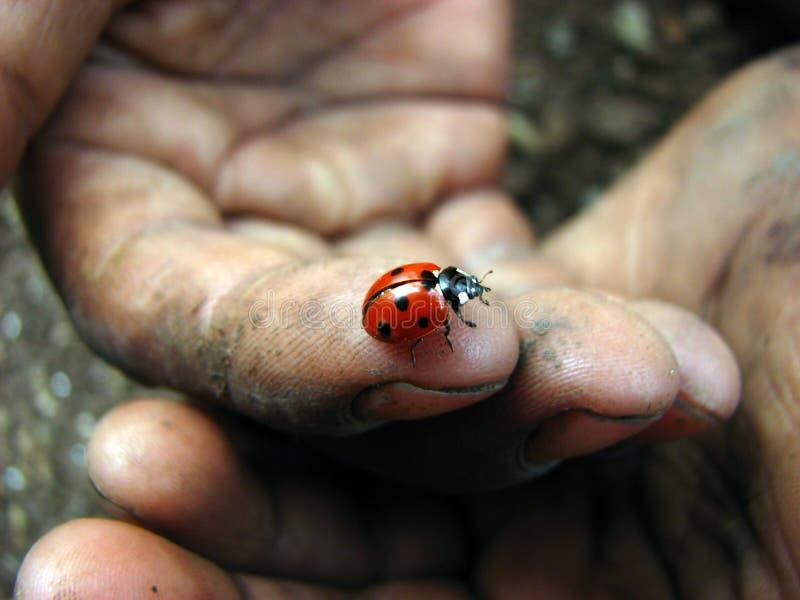 A Healing Hand stock photo
