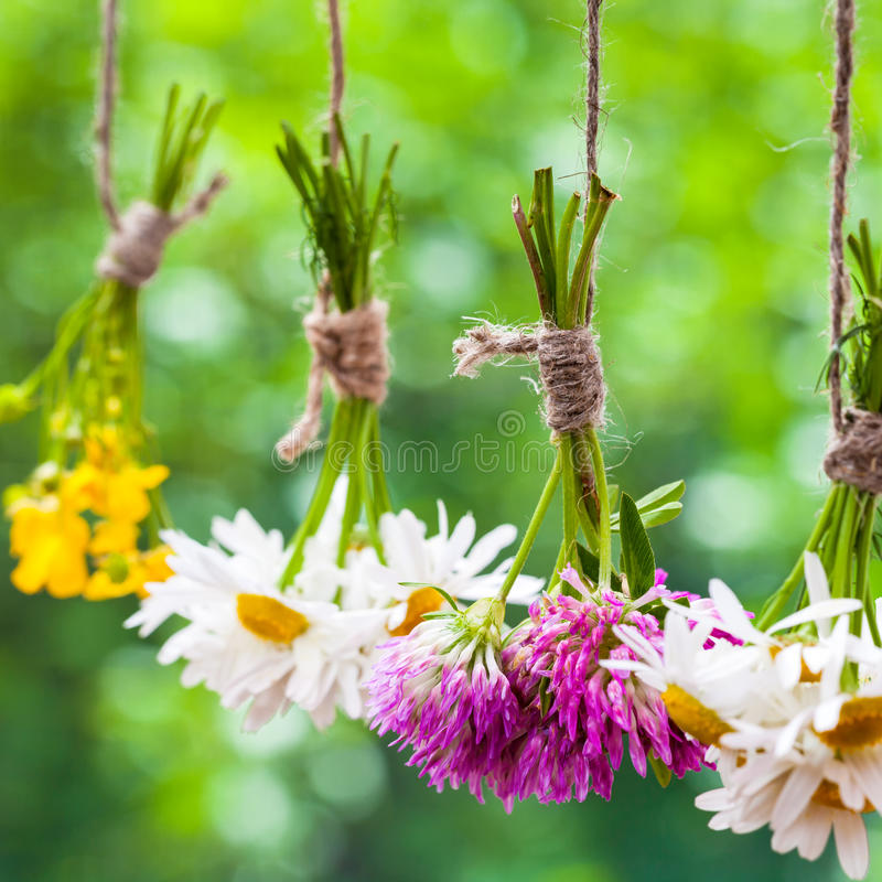 Healing herbs bunches. Focus on clover. royalty free stock images