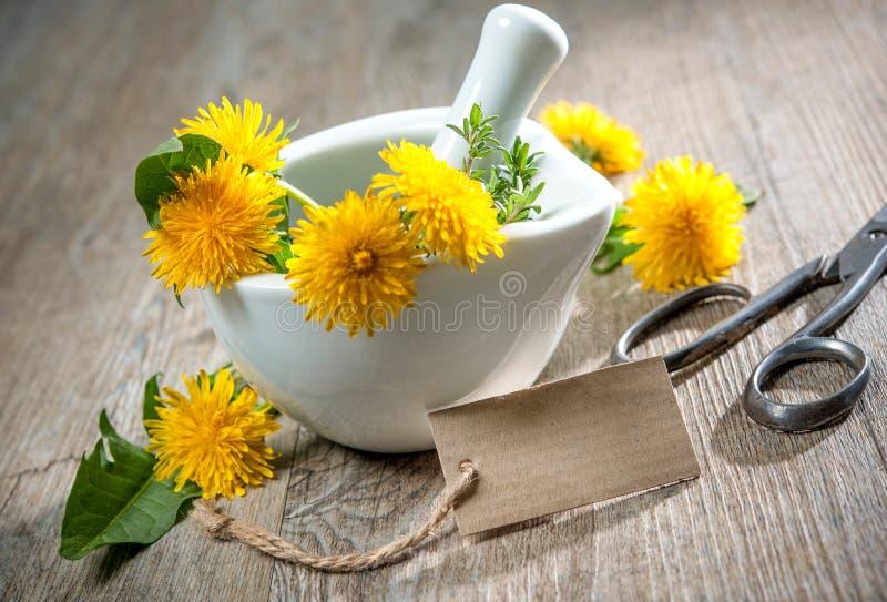 Healing herbs. Dandelion stock image