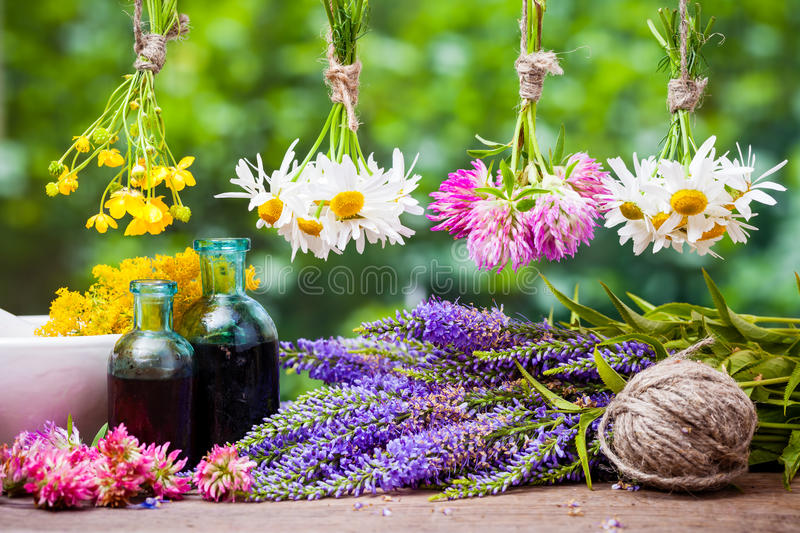 Healing herbs. Herbal medicine. royalty free stock photography