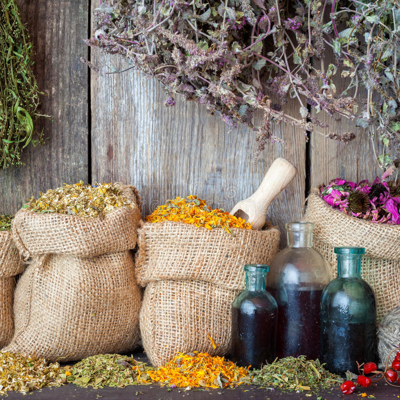 Healing herbs in hessian bags and bottles of essential oil stock image