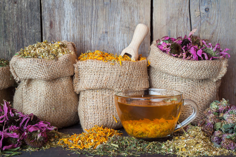 Healing herbs in hessian bags and healthy tea cup. Herbal medicine royalty free stock photography