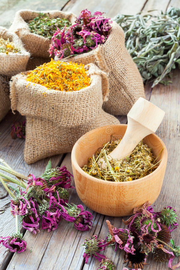 Healing herbs in wooden mortar and in bags, herbal medic royalty free stock photography