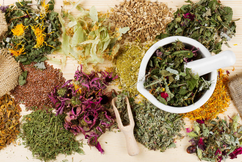 Healing herbs on wooden table, herbal medicine royalty free stock image