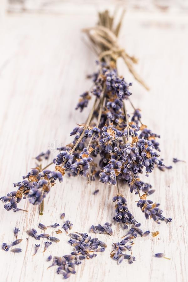 Healing plants: Lavender bouquet on white wood stock images
