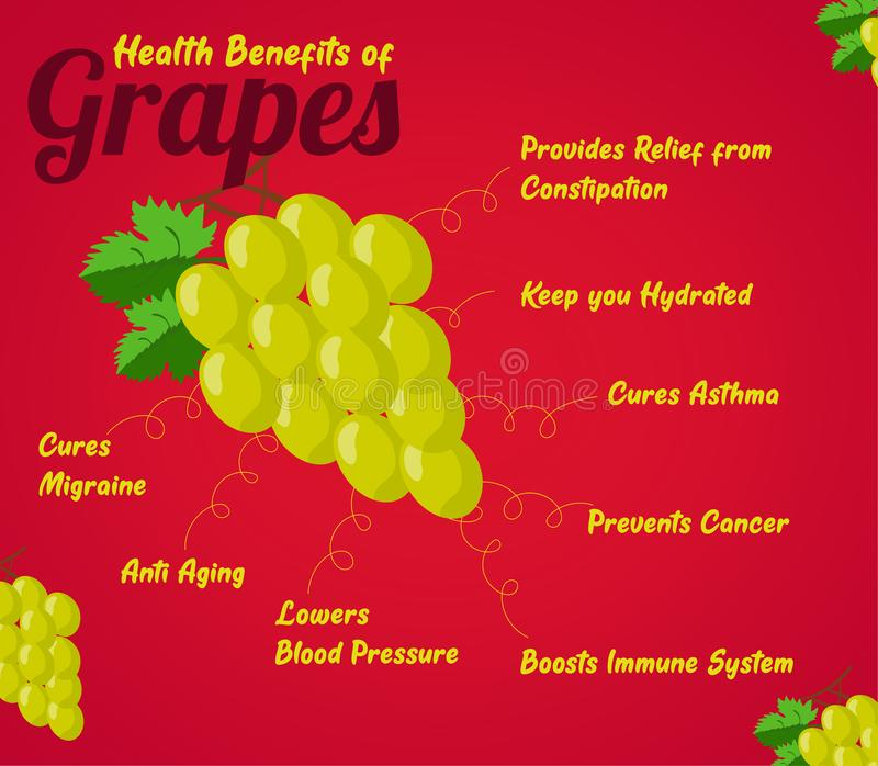 Health Benefits of Grapes. Fresh Fruit. Healthy food to eat stock photography