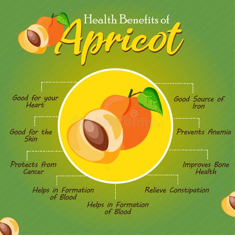Health Benefits of Apricot. Fresh Fruit. Healthy fruit to ear stock images