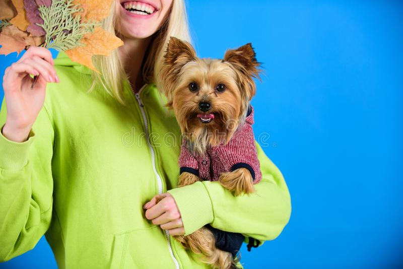 Health care for dog pet. regular flea treatment. Pet health tips for autumn. Girl hug cute dog and hold fallen leaves. Woman carry yorkshire terrier. Take care stock image