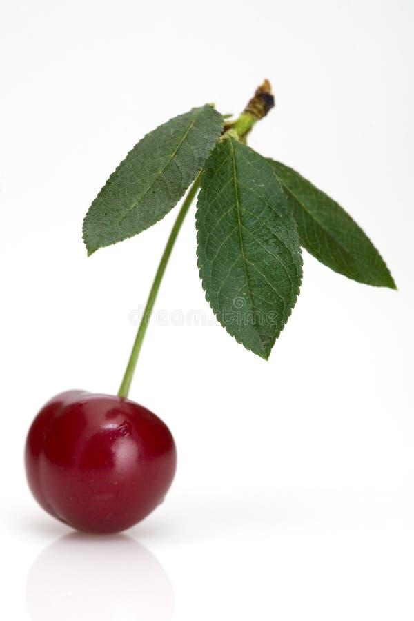 Health cherry stock image
