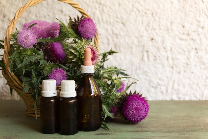 Health concept with essential oils of thistle for alternative medicinal use royalty free stock images