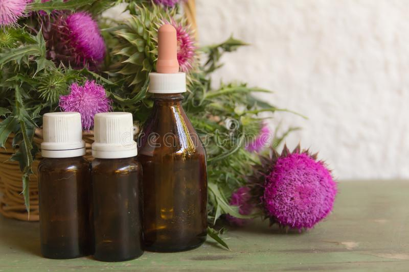 Health concept with essential oils of thistle for alternative medicinal use stock images