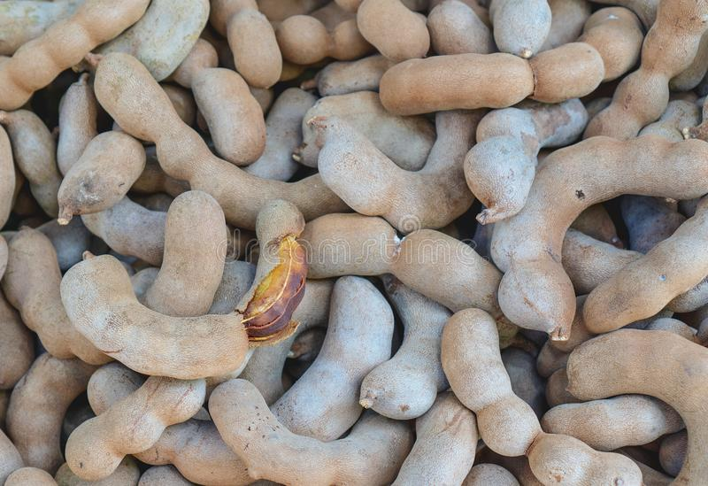 Health and eating lots of sweet tamarind. Fruit from Thailand stock image